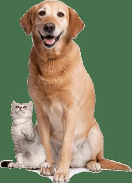 veterinär på nätet